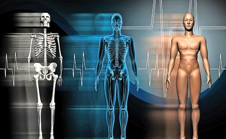 Curiozitati despre corpul uman Corpul-uman